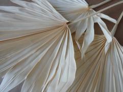 Palm Suncut