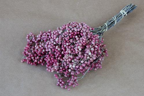 Pfeffer rosa
