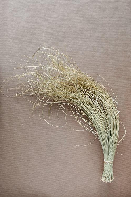 Desert Gras bleached