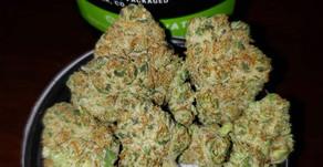 Cannabis, Plastic Waste, & Prosthetics
