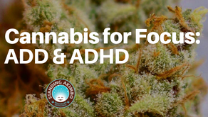 Cannabis and the Effects on Focusing for ADD and ADHD Backed by Science