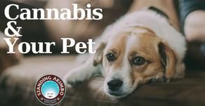 Veterinarians & Cannabis Laws
