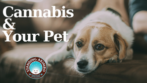 Veterinarians & Cannabis Laws