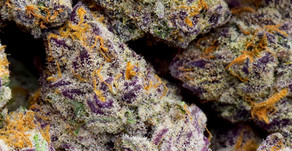 Cannabis Education: What's a Cannabinoid?
