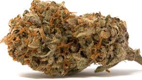 The Jillybean Cannabis Strain Review