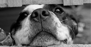 4 Things to Know About Cannabis & Your Pet