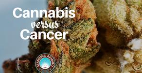 Cannabis as a Treatment of Cancer?
