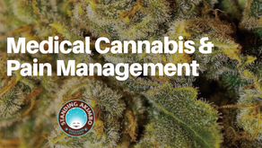 Medical Cannabis and Pain Management