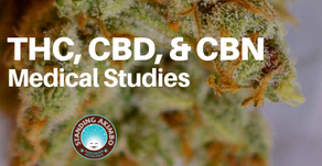 Cannabinoids: the differences in THC, CBD, & CBN through medical cannabis studies