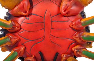 Toucan-Crab
