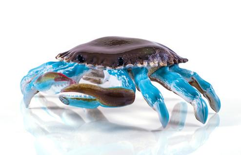 Massachusetts Bay Crab