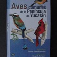 Aves comunes de la Península de Yucatán