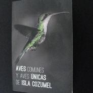 Aves comunes y aves únicas de Isla Cozumel