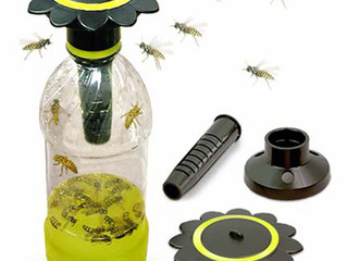 Getting Rid of Wasps the Green Way