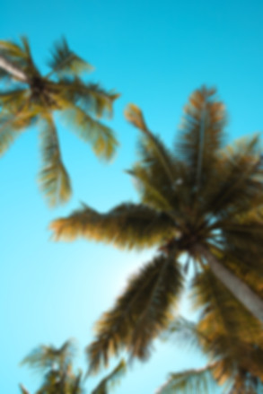 Palm trees you see while spending time in your swimwear