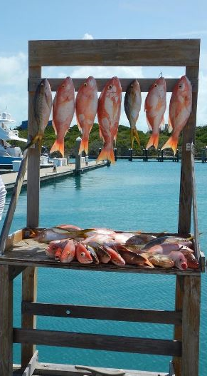 Z Cave Cay Snapper tseitz15 8-16 I.png