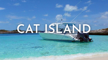 cat island@1x.png