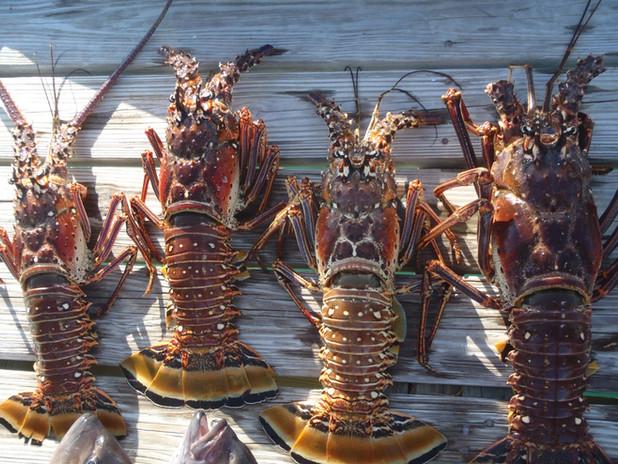 Hawks Nest Marina Lobster.jpg