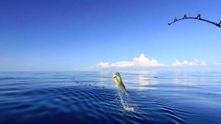 FLYING FISH MARINA, LONG ISLAND