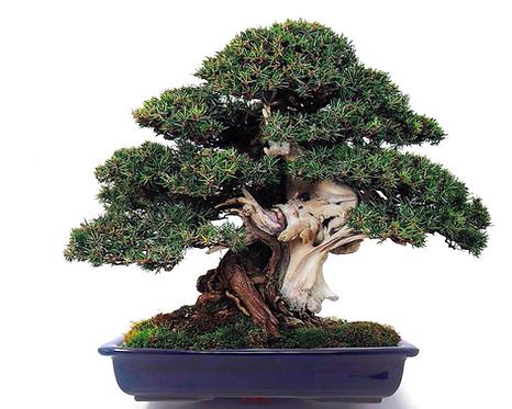 vasi giapponesi per bonsai