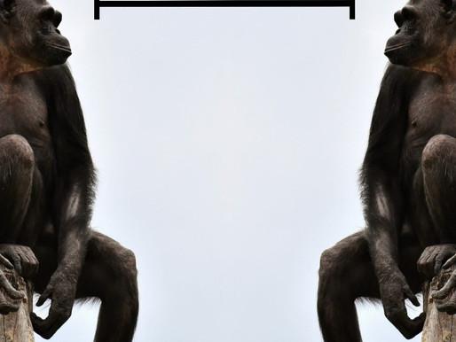 Il punto di vista animale sul distanziamento sociale
