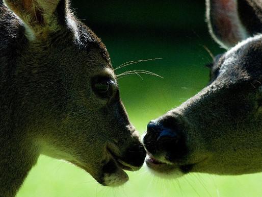 L'amore non ha confini di specie