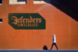 defendersofwildlifegraffiti