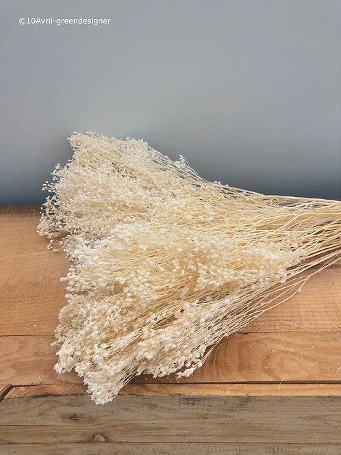 Broom Blanc