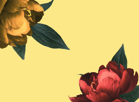 A Brief History of Roses, And Why It's Imperative To Stop And Smell Them