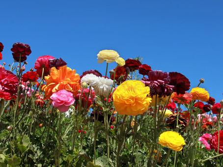 Laat honderd bloemen bloeien, de 2019/2020 editie.