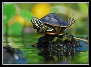 turtle plank