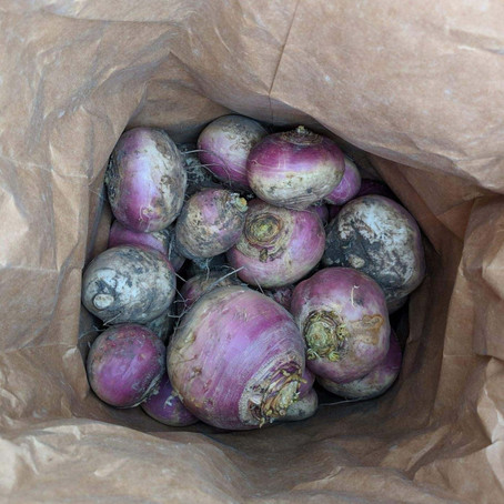Cooking with Food Plot Turnips