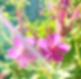 IMG_4099_edited_edited.jpg