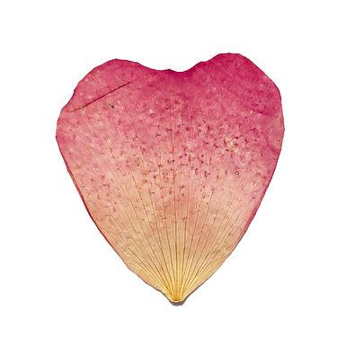 heart%20rose%202%20copy_edited.jpg
