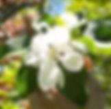 IMG_4259_edited.jpg