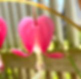 IMG_3505_edited_edited.jpg