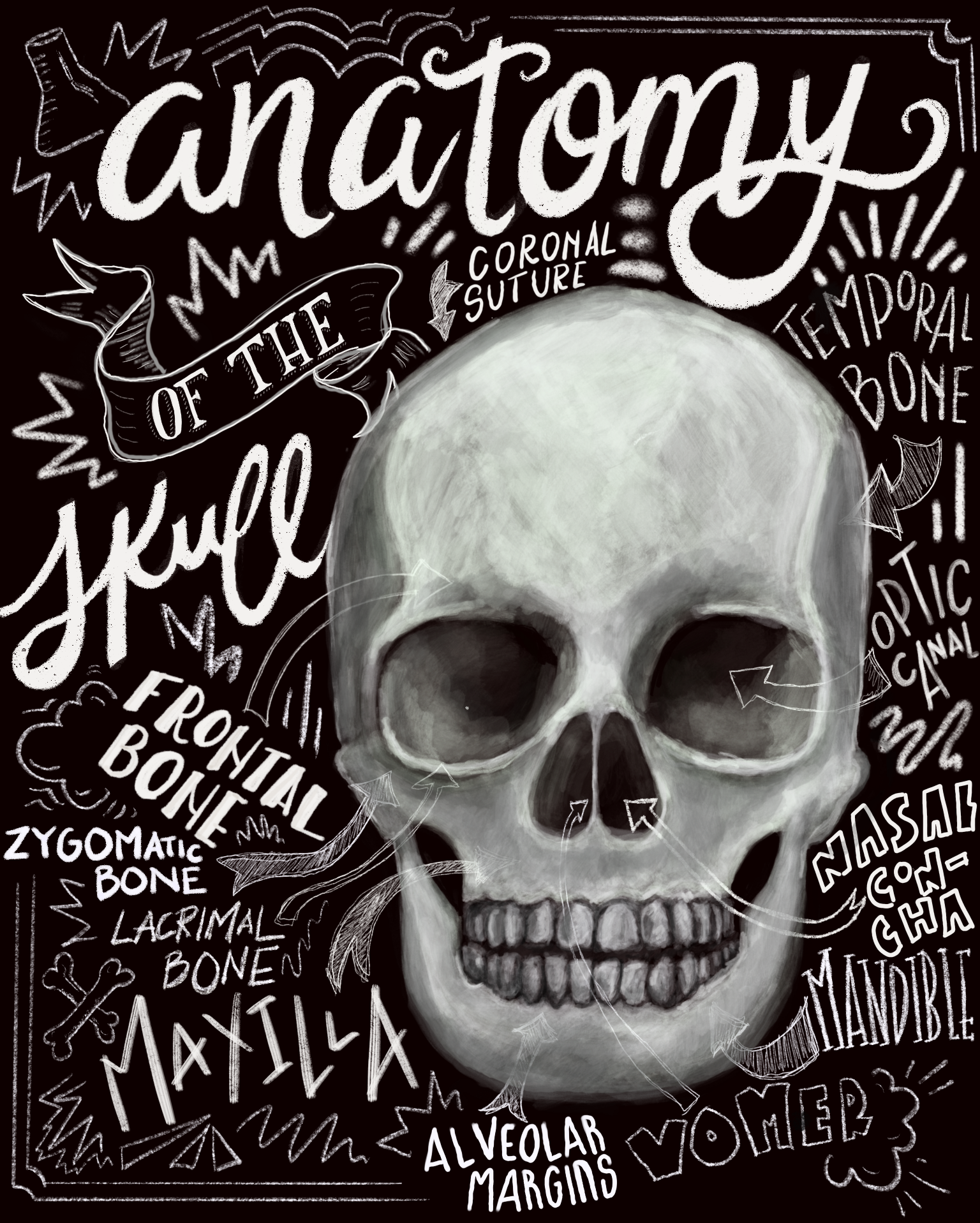 Anatomy of a Skull