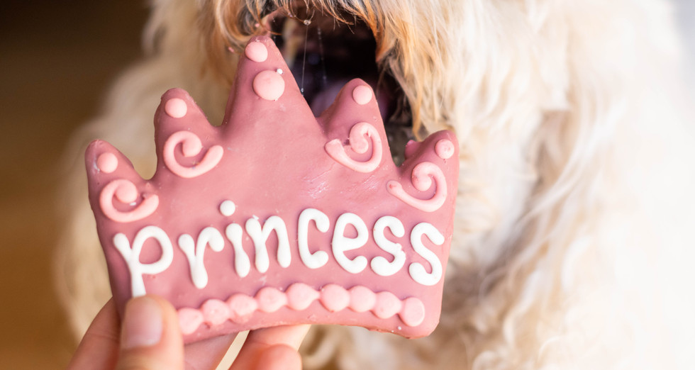 Fluffy dog hungry for special princess c