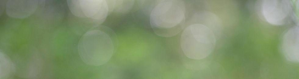greenbackgr.jpg