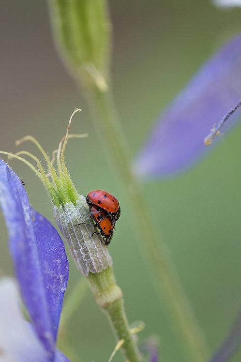 12 x 18 Metal Ladybugs