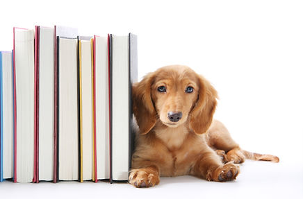 Read to a Dog Online
