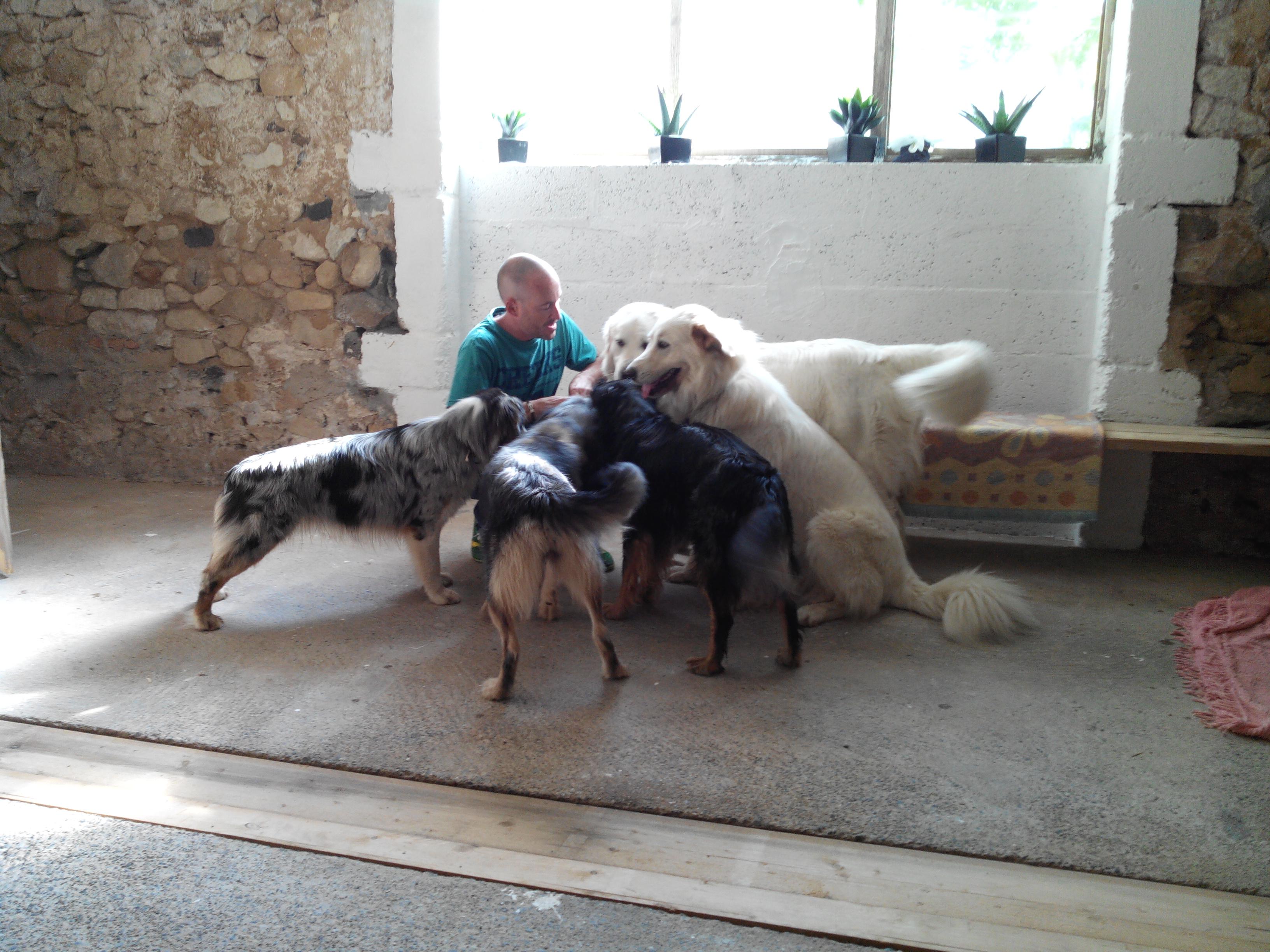 Pension canine Feli'Cyno