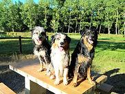 psychologie canine landes
