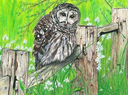 Barred Owl on Fence Canvas Print