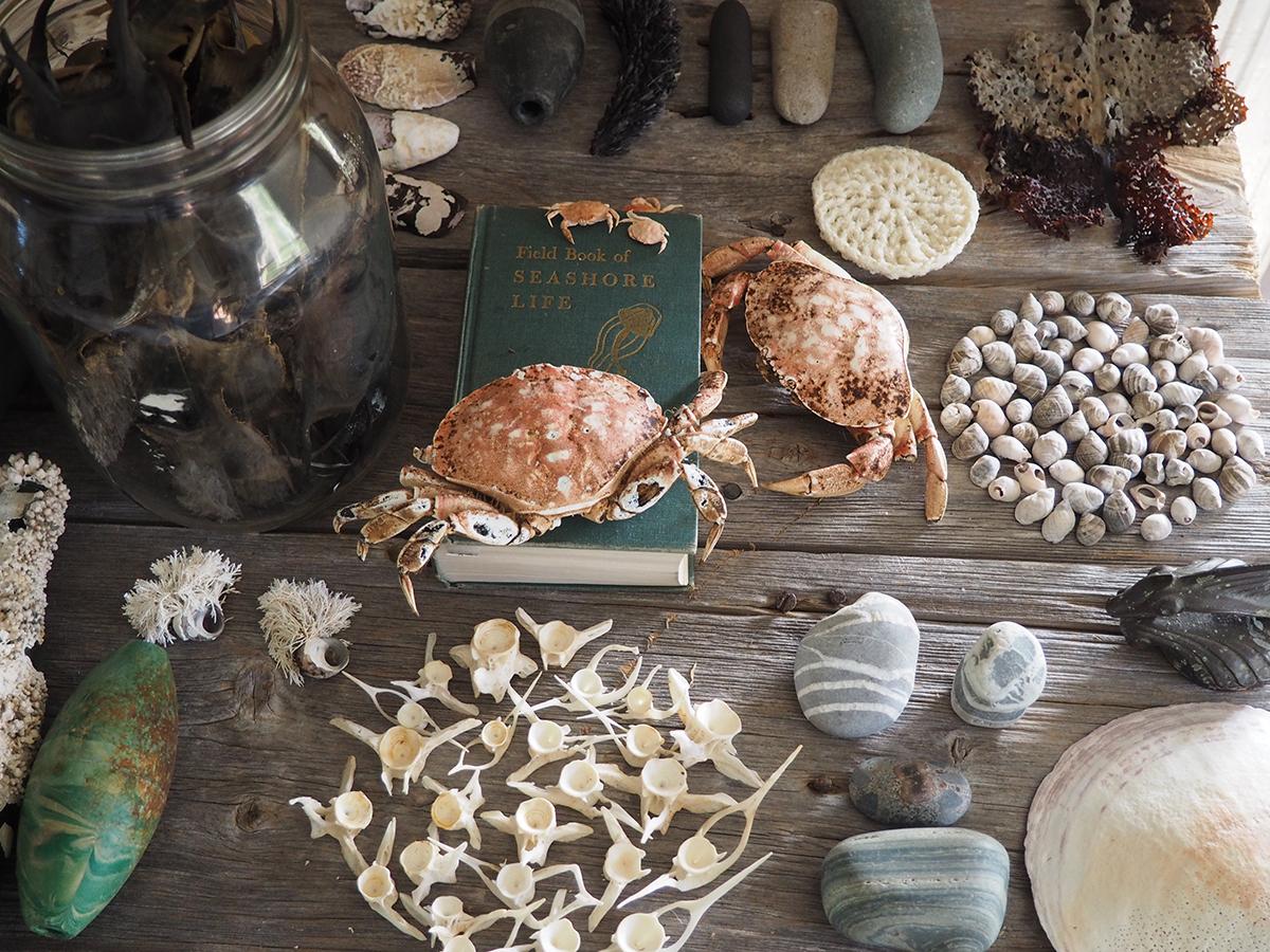 Natural History, detail