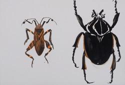Bugs 8