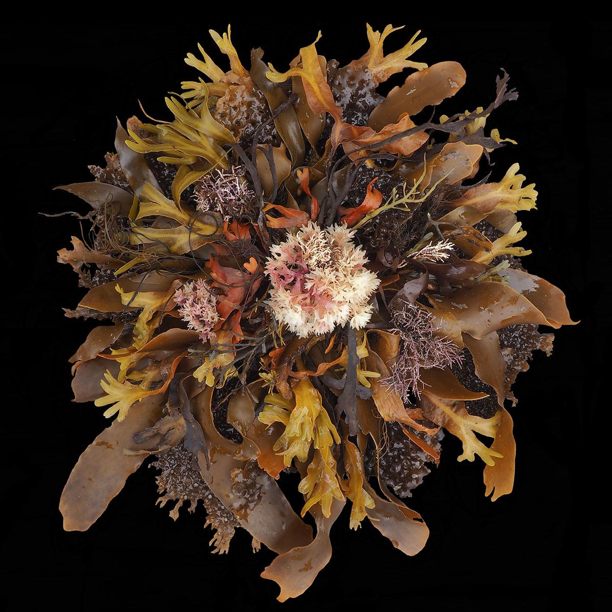 seaweed6small