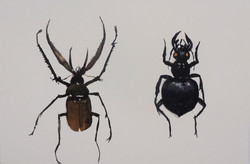 Bugs 9