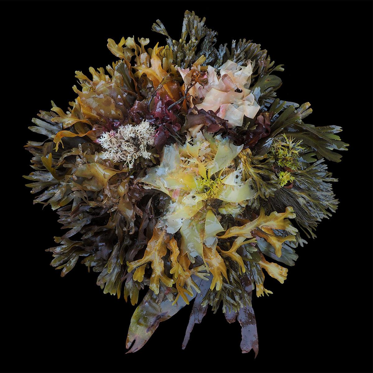 seaweed3small
