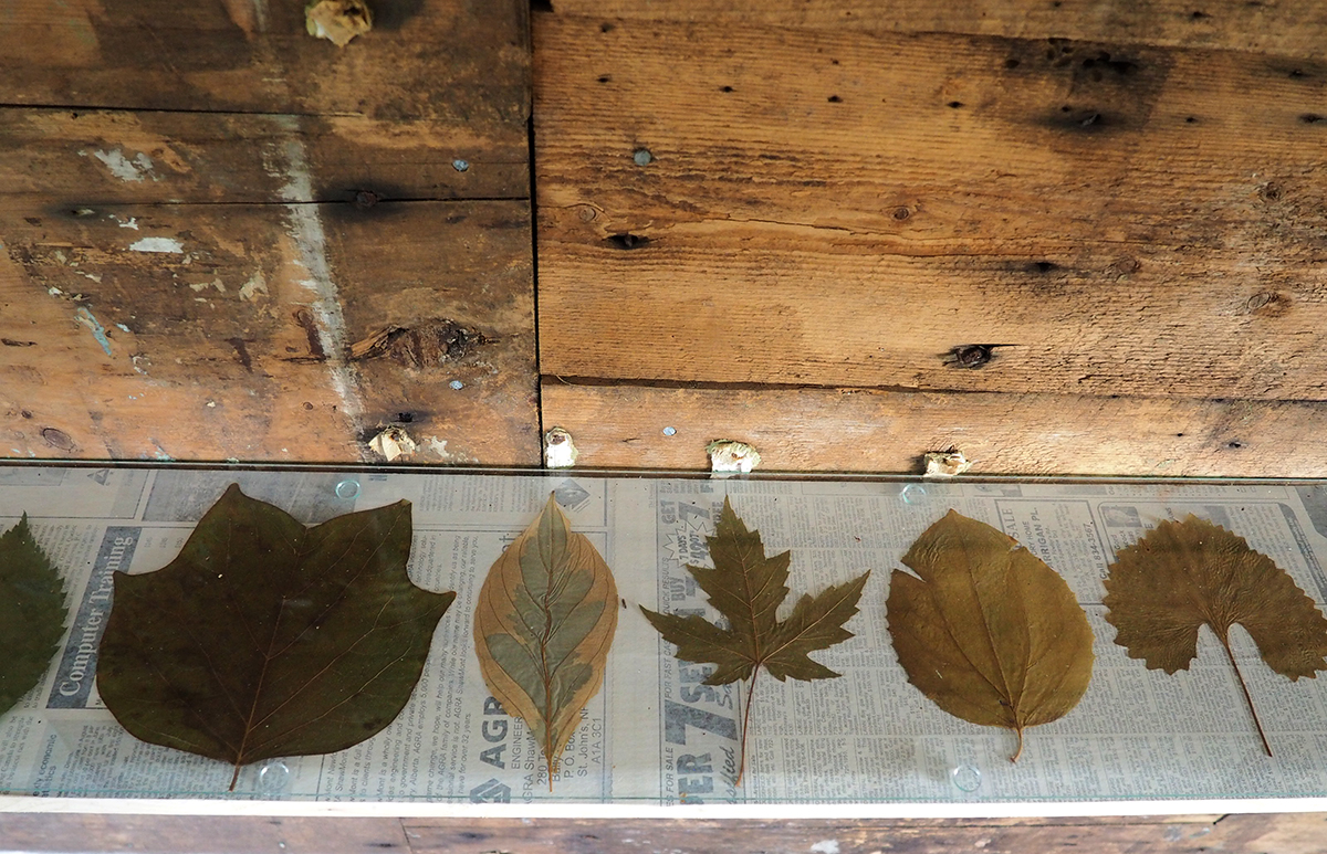 Leaf Collection 3